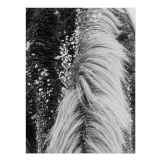 Winter Horse Mane with Snow Poster
