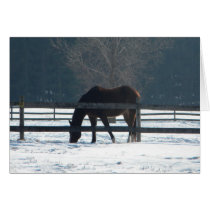 Winter Horse Next To Fence Card