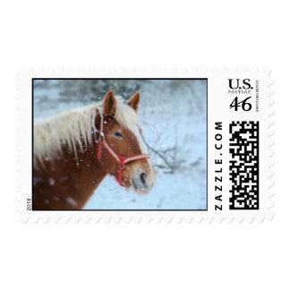 winter horse postage