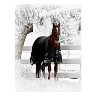 Winter Horse Post Cards