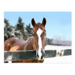 Winter horse postcard