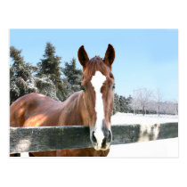 Winter horse postcard