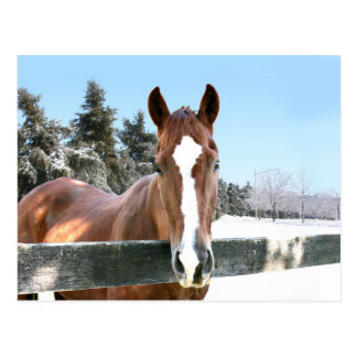 Winter horse post card