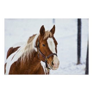 Winter Horse Posters