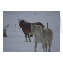 Winter Horses Card