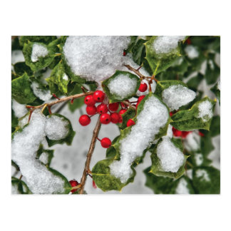 Winter - Ice coated Holly Postcard