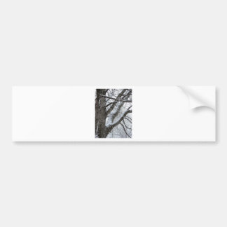 Winter ice tree branches photo E.L.D. Car Bumper Sticker