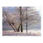 Winter Ice Trees Postcard