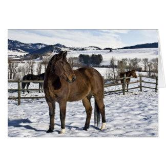 Winter in Bozeman, Montana Card