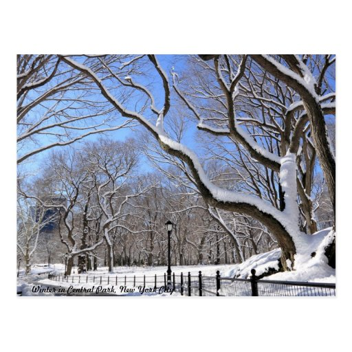 Winter in Central Park, New York City Postcard