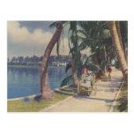 Winter in Florida, 1908 Postcard