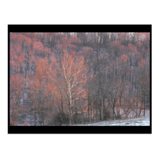 ~ Winter in Lancaster County ~ 10 Postcard