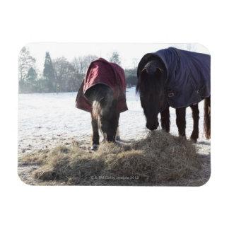 Winter in Rural Hertfordshire, England Magnet