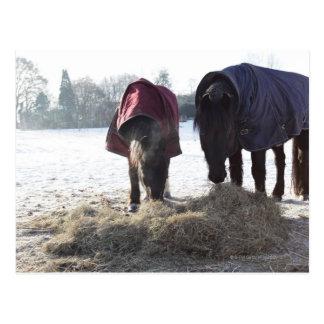 Winter in Rural Hertfordshire, England Postcard