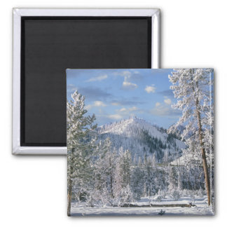 Winter in Yellowstone National Park, Wyoming Magnet