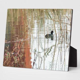 Winter lake colors black dark duck swimming poster photo plaques