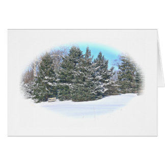 WINTER LANDSCAPE /EVERGREEN TREES & BENCH IN SNOW CARD