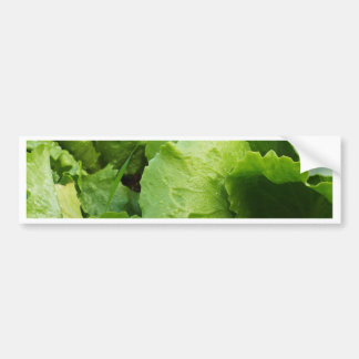 winter lettuce bumper sticker