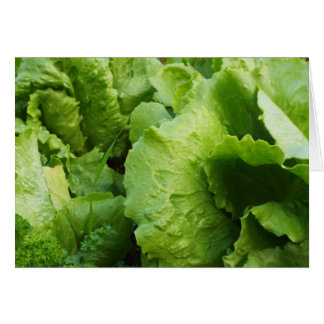 winter lettuce card