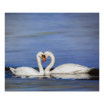 Winter Love Swan Couple Poster