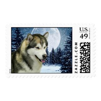 Winter Malamute Postage Stamp