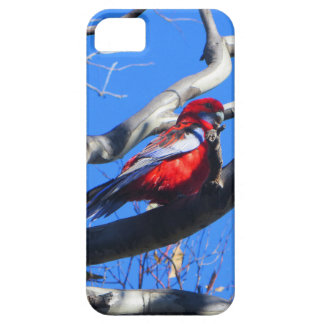 Winter Nature in Canberra iPhone SE/5/5s Case
