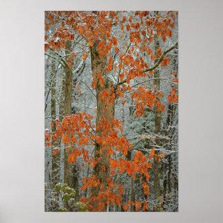 Winter Oak Poster