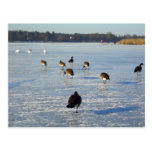 Winter on the River Havel in Berlin Postcard