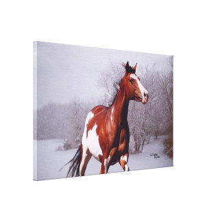 Winter paint horse Stretched Canvas Print