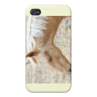Winter Palomino Colt Pony Horse iPhone 4/4S Covers