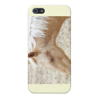 Winter Palomino Colt Pony Horse Case For iPhone 5