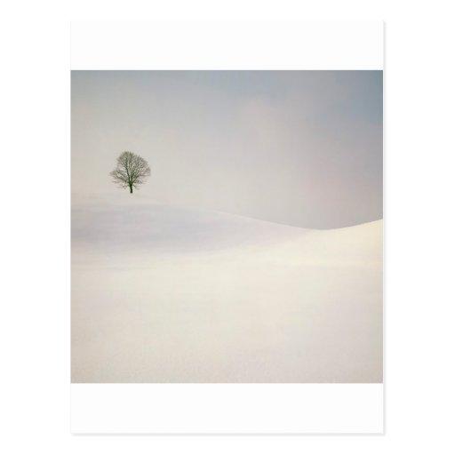 Winter Peaceful Season Near Hirzel Switzerland Post Card