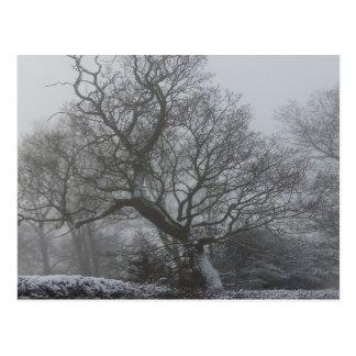 Winter Photo Scene Postcard