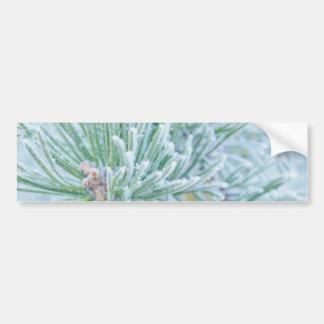 Winter Pine Car Bumper Sticker