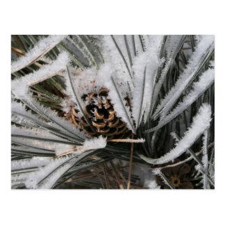 Winter Pine Cone Postcard