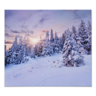 Winter Pine Forest Poster