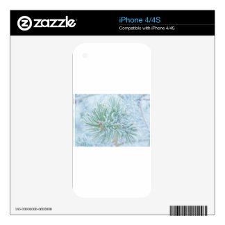 Winter Pine iPhone 4 Decal