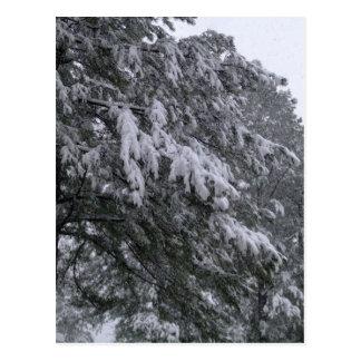 Winter Pine Postcard