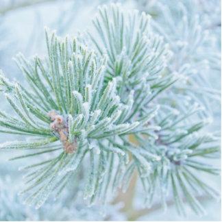 Winter Pine Statuette