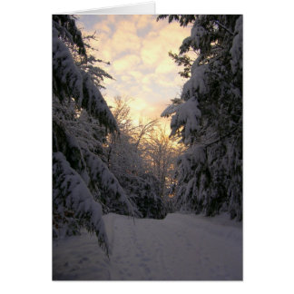 Winter Pines Sunrise Photography Note Card