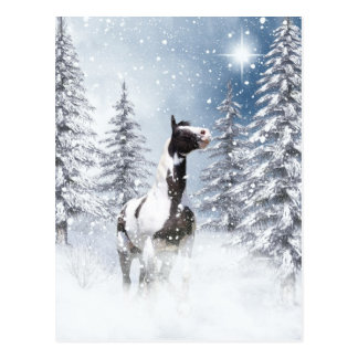 Winter pinto horse post cards