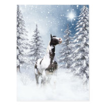 Winter pinto horse postcard
