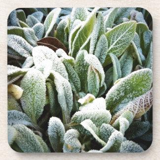 Winter Plants Beverage Coasters