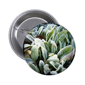 Winter Plants Buttons