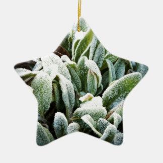 Winter Plants Christmas Ornament