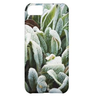 Winter Plants Cover For iPhone 5C