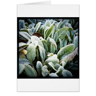Winter Plants Greeting Cards