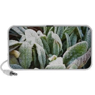 Winter Plants iPod Speaker