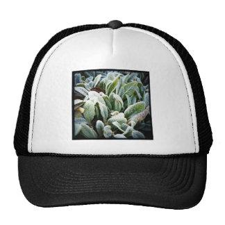 Winter Plants Mesh Hats