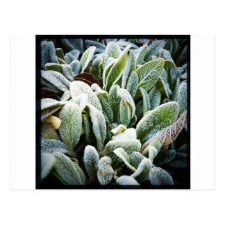 Winter Plants Post Cards